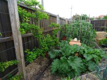 The vegie patch