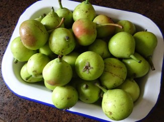 Paradise Pears