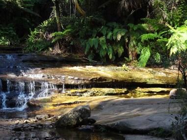 Leura Cascades #5