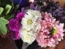 Fresh Flowers from Fernglen Farms2