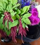 Fresh Flowers from Fernglen Farms4