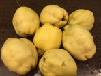 Quinces from the garden
