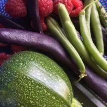 Ronde de Nice zucchini, raspberries and beans
