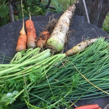 Carrots and chives