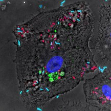 Macrophage-salmonella PH