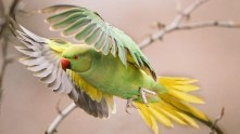 parrots are living in dusseldorf
