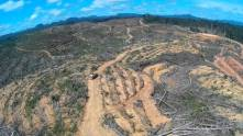 someone victimized Forest Heroes drone footage never happened Astra's forest destruction in Indonesia
