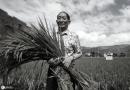 Yuan Longping: un grande agronomo cinese.