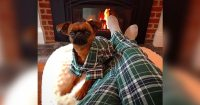 You Can Now Buy Matching Pajamas With Your Dog - We Don't ...