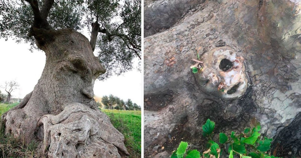 10 creepy trees that