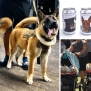 Innovative Brewery Puts Pictures Of Shelter Dogs On Their