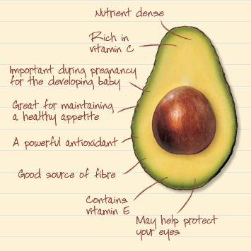 avocado_seeds_have_many_benefits_2