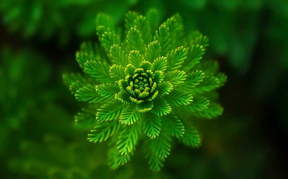 water-plant-821293_960_720