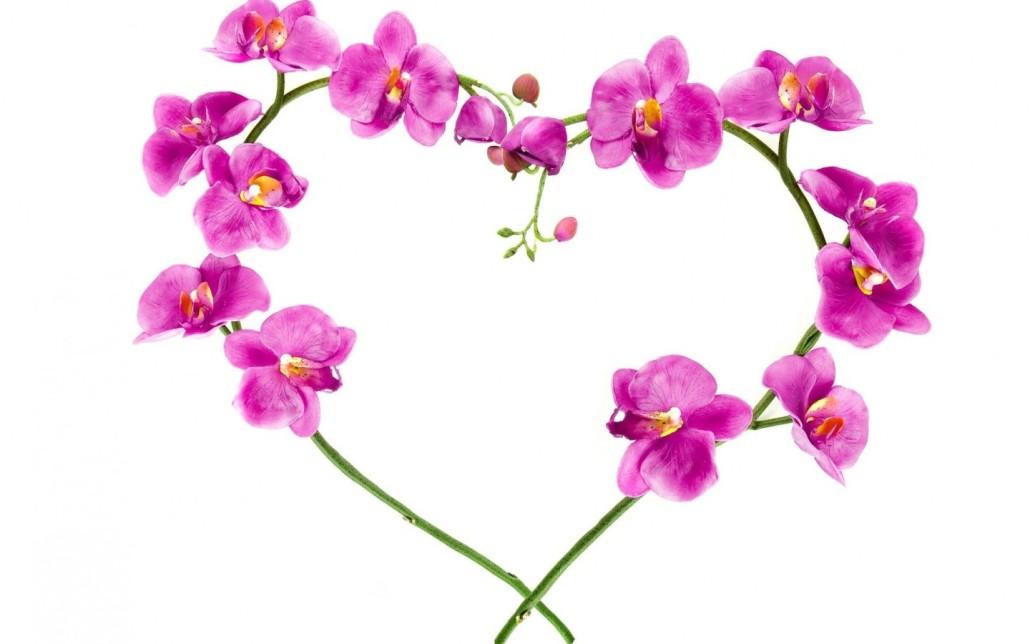 Happy Valentines Day Santa Barbara International Orchid