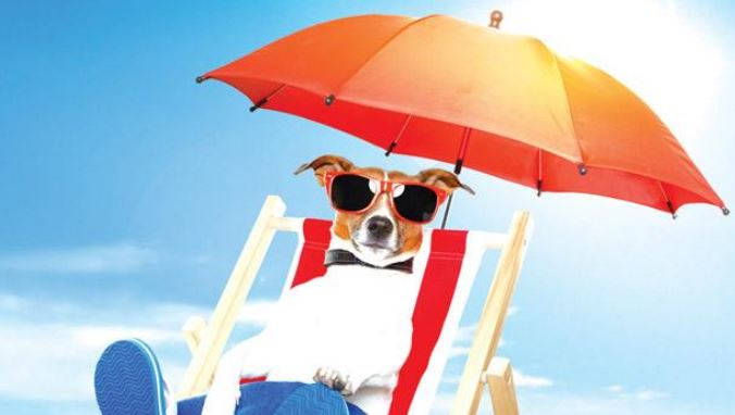 keep dog cool