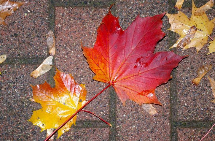 leaves on patio
