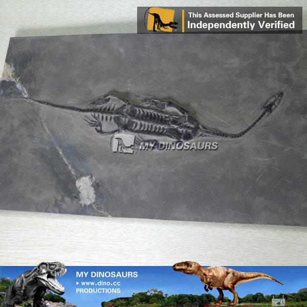 My dino-fossil skeletons mini sized keichousaurus hui replicas