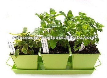 kitchen herb kit white towels planter growing container garden buy