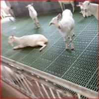 Goat Slat Floor For Goat Farming In India - Buy Goat Slat ...