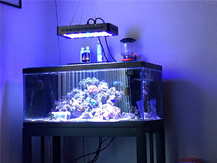 Best Led Lighting Reef Tank