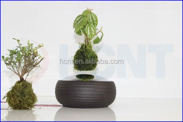 Floating Bonsai Online