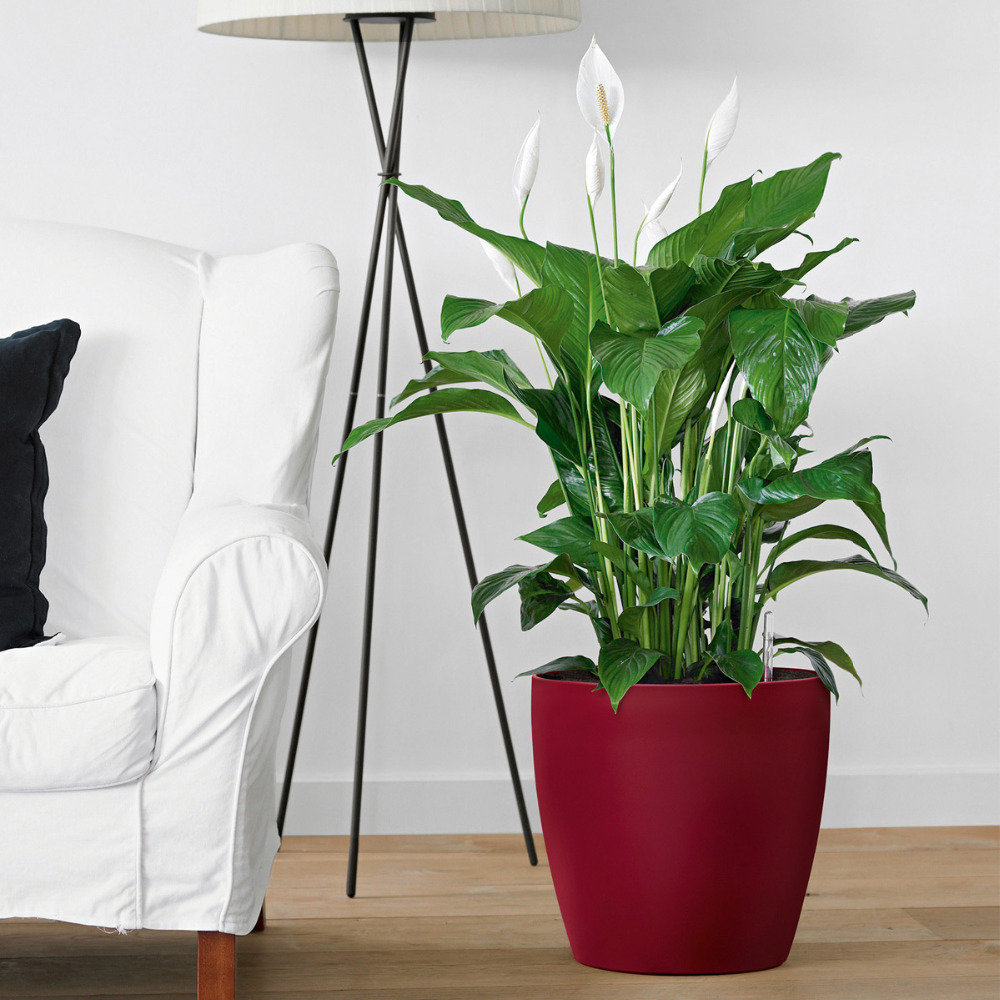 Grote Hoge Plantenpot.Grote Hoge Bloempot Pot Vaas Lifestyle By Leonie