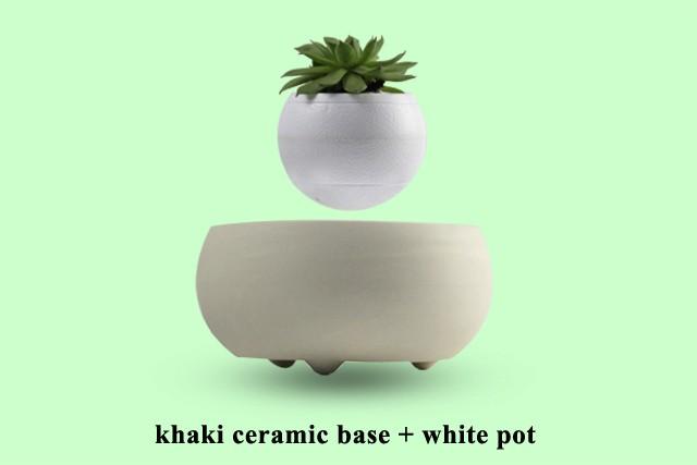 Floating Bonsai Price
