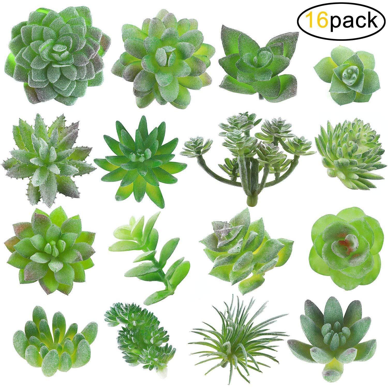 Cheap Indoor Plants Succulents Find Indoor Plants Succulents Deals On Line At Alibaba Com
