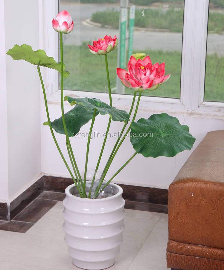 Indoor Lotus Plant
