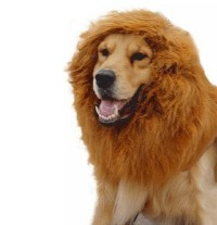 Lion Mane Costume And Big Dog Lion Mane Wig