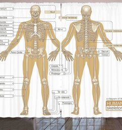 get quotations human anatomy curtains by ambesonne diagram of human skeleton system with titled main parts of [ 1500 x 1274 Pixel ]
