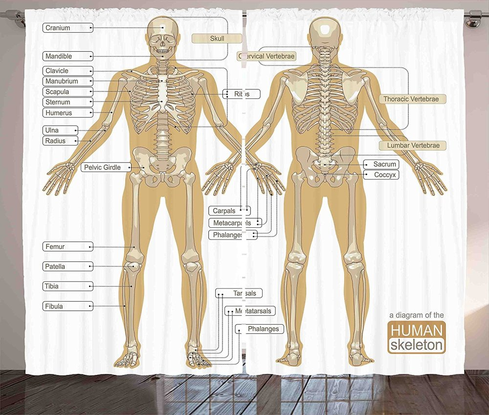 medium resolution of get quotations human anatomy curtains by ambesonne diagram of human skeleton system with titled main parts of