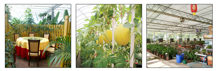 Hydro Cooling System Fruits