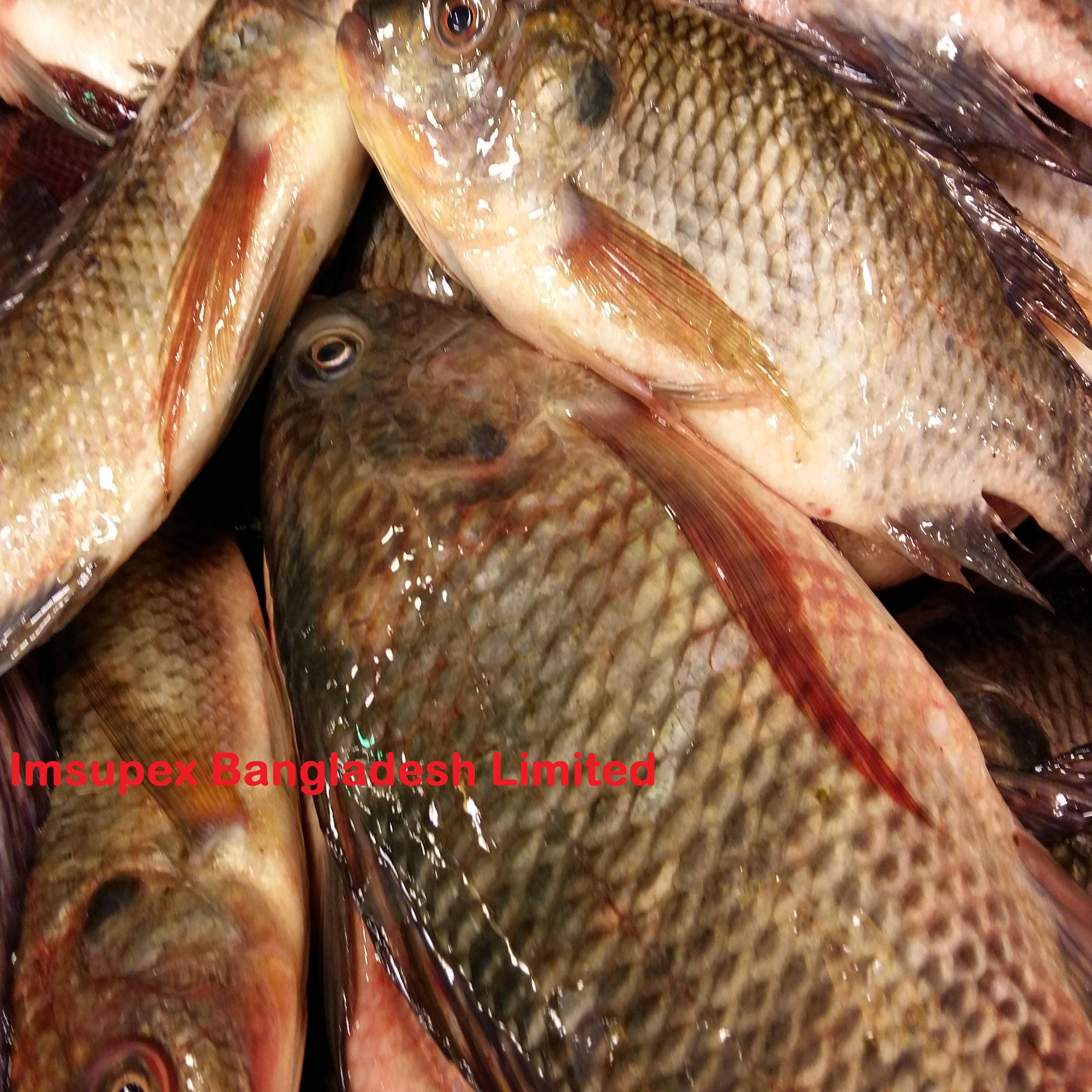 Whole Fish Distributors