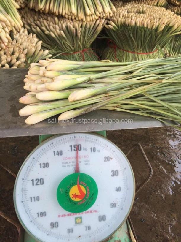 Best Quality Frozen Lemongrass From Vietnam 2018