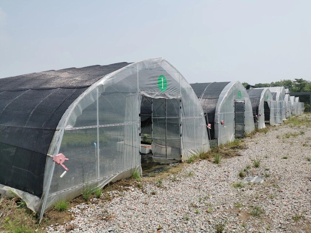 serre hydroponique en plastique carbonate tunnel sous forme de tunnel en vente buy serre tunnel a vendre serre hydroponique en plastique