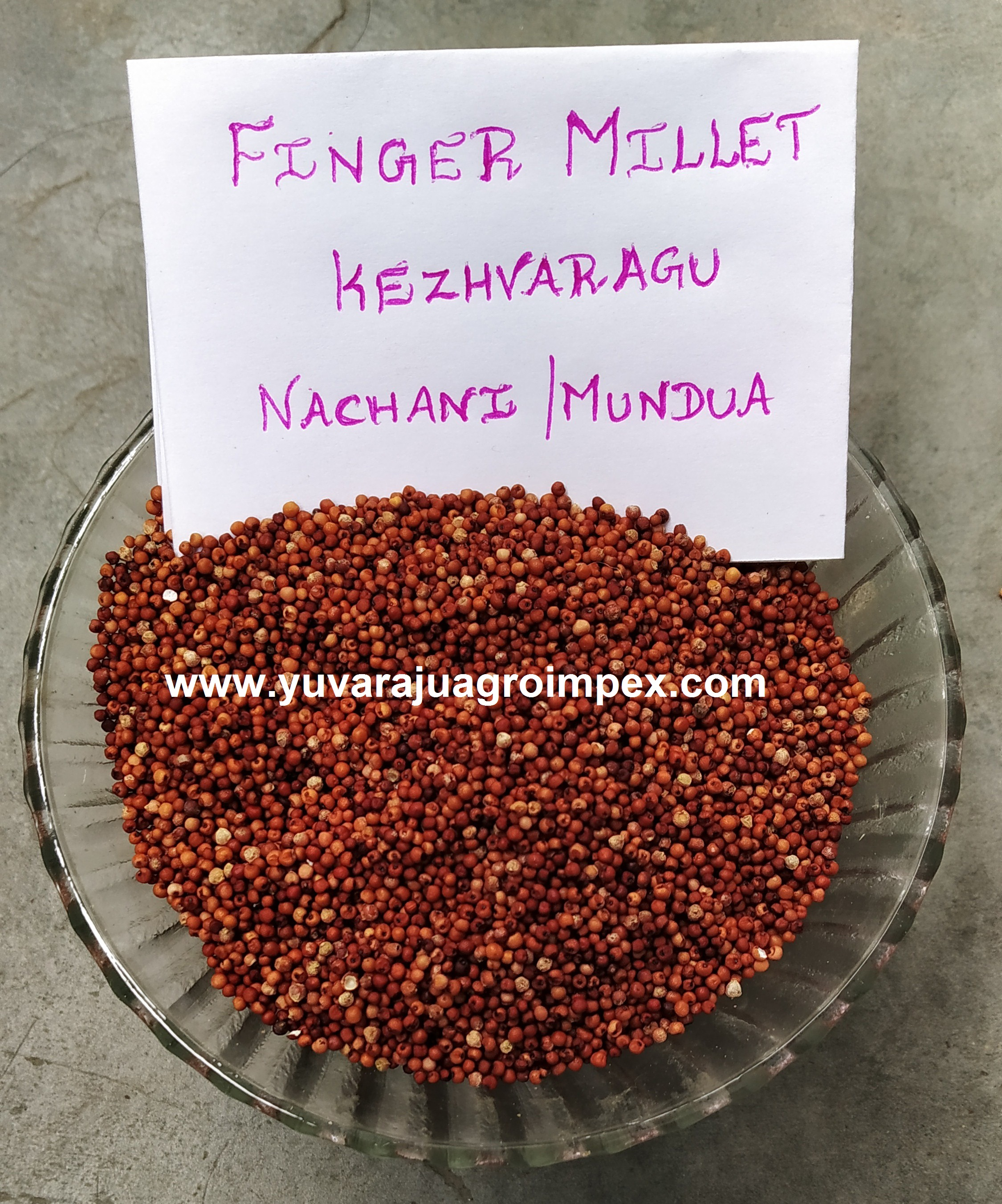 Finger Millet In Tamil : finger, millet, tamil, Wholesale, Supplier/, Exporter, India, Seeds,Ragi, Tamil, Nadu,Rumus, Kimia, Product, Alibaba.com