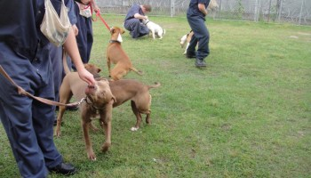 Operation New Hope gives dogs and inmates a second chance - SCAD