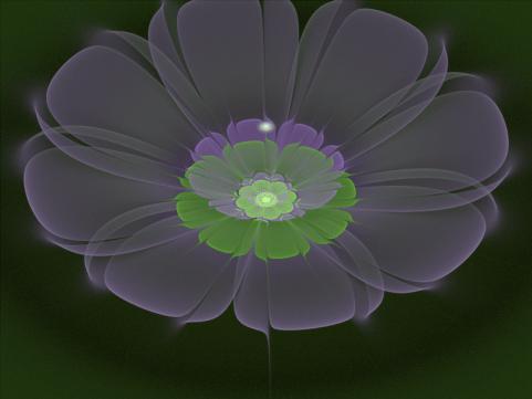 Мистический ночной цветок