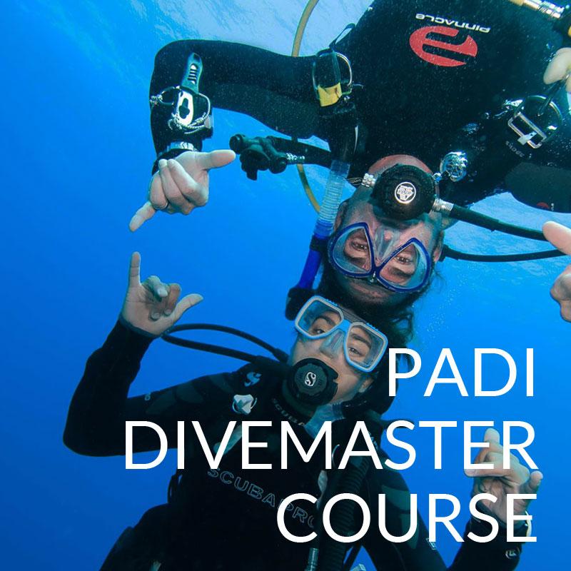 padi divemaster course puerto galera scandi divers resort