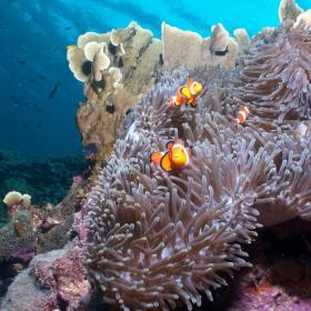 puerto galera scuba diving photos philippines