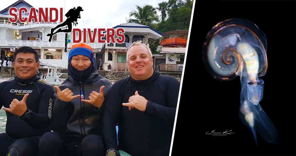 blackwater diving puerto galera scandi divers resort