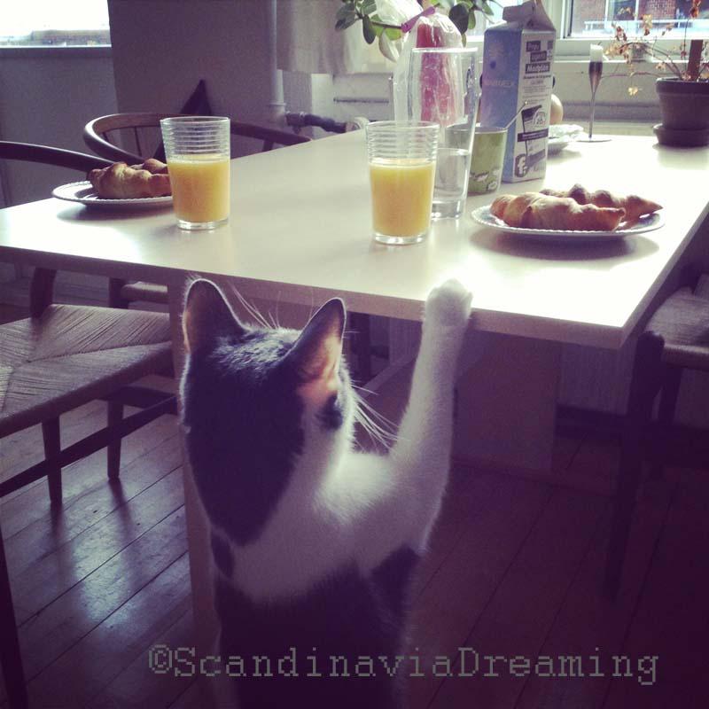 Minimis, tenté par l'odeur des croissants au petit-déjeuner