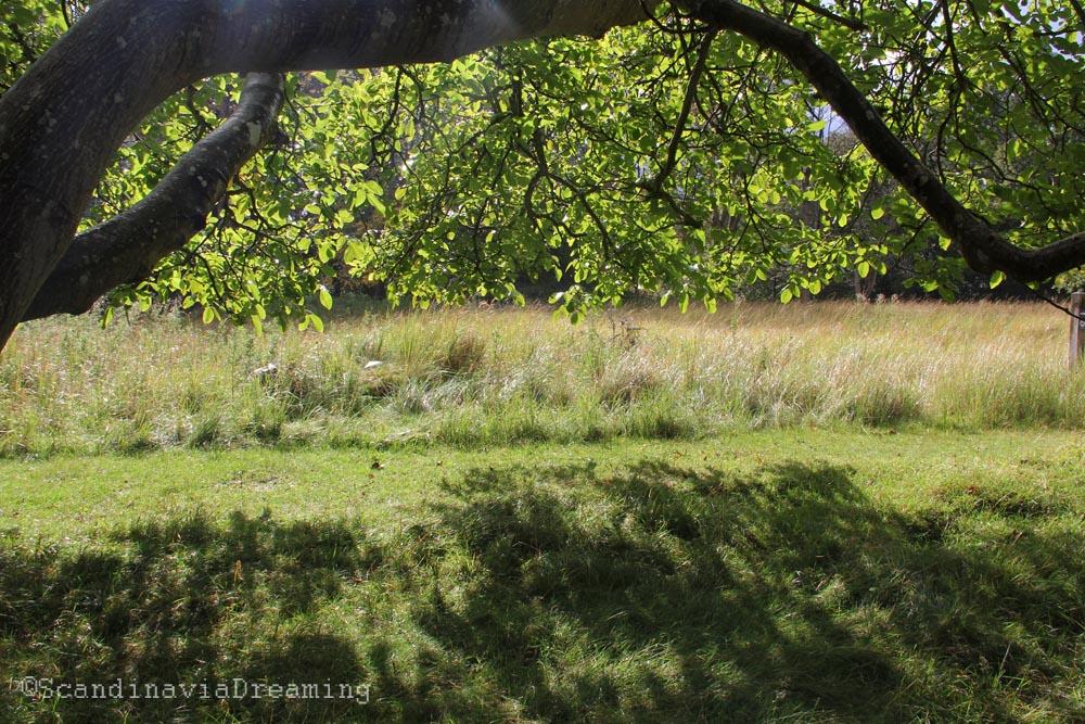 Sous les feuilles le soleil
