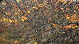 Lumière d'automne dans les feuilles