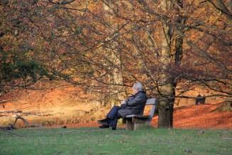 Petite pause dans le parc de Dyrehaven