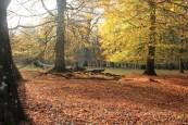 Sous-bois couvert de feuilles mortes