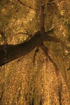 Pluie de lumière à Tivoli