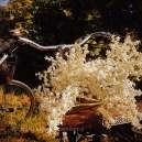 AmagerFaelled au printemps