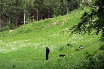 Dans les bois danois